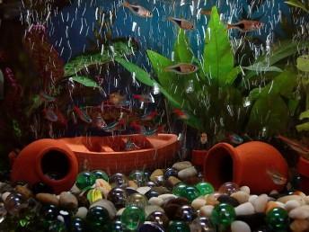 Ideální je zvolit akvárium o objemu alespoň 20 litrů, zdroj: wikipedia.org
